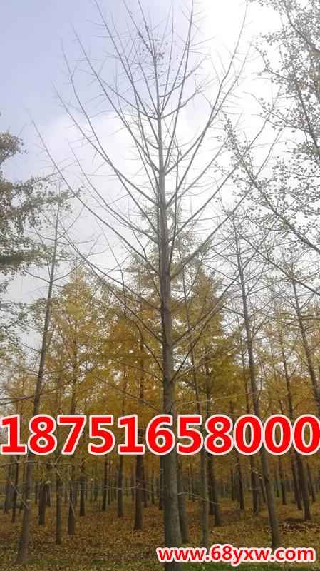 20公分好树形