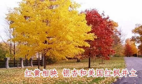 QQ图片181026133352.jpg