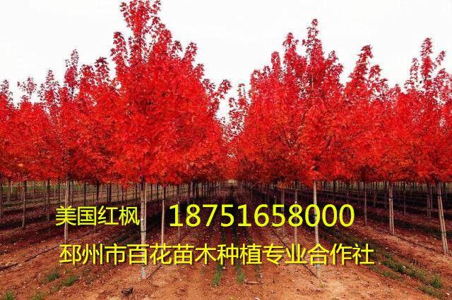 QQ图片1810261334.jpg